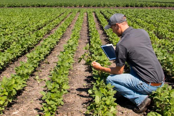 Farming Field Crops