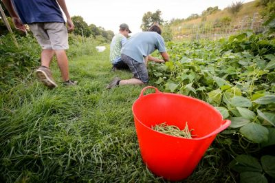 students working at Spring Valley Student Farm at UConn